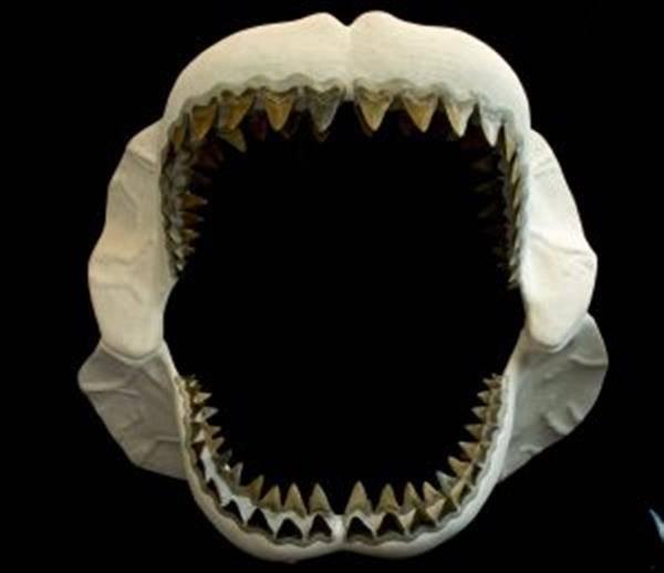 플로리다의 과학 교육 센터, 3D 출력된 상어 이빨로 활용으로 학생들 집중도 향상