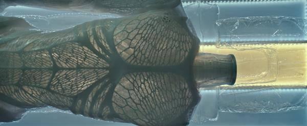 마이클 패스밴더, 영화 에일리언:커버넌트에서 3D 프린터로 출력되다